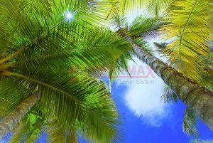 Ağaç - Gökyüzü Gergi Tavan Görselleri 285