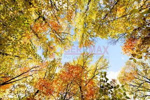 Ağaç - Gökyüzü Gergi Tavan Görselleri 286