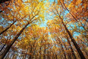 Ağaç - Gökyüzü Gergi Tavan Görselleri 287