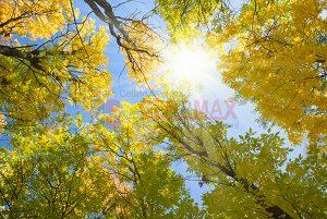 Ağaç - Gökyüzü Gergi Tavan Görselleri 28