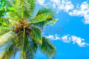 Ağaç - Gökyüzü Gergi Tavan Görselleri 293