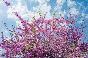 Ağaç - Gökyüzü Gergi Tavan Görselleri 294