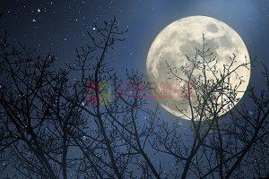 Ağaç - Gökyüzü Gergi Tavan Görselleri 295