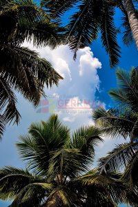 Ağaç - Gökyüzü Gergi Tavan Görselleri 2