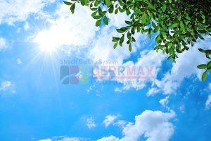Ağaç - Gökyüzü Gergi Tavan Görselleri 298