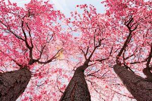 Ağaç - Gökyüzü Gergi Tavan Görselleri 300