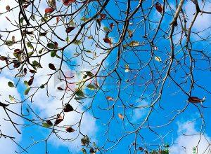 Ağaç - Gökyüzü Gergi Tavan Görselleri 302