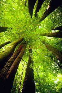 Ağaç - Gökyüzü Gergi Tavan Görselleri 30