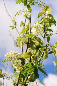 Ağaç - Gökyüzü Gergi Tavan Görselleri 309
