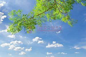 Ağaç - Gökyüzü Gergi Tavan Görselleri 31