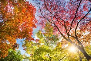 Ağaç - Gökyüzü Gergi Tavan Görselleri 318