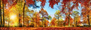 Ağaç - Gökyüzü Gergi Tavan Görselleri 322