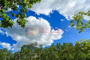 Ağaç - Gökyüzü Gergi Tavan Görselleri 323