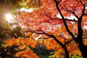 Ağaç - Gökyüzü Gergi Tavan Görselleri 325