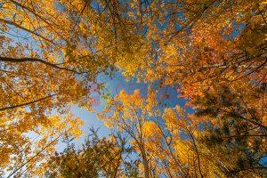 Ağaç - Gökyüzü Gergi Tavan Görselleri 327