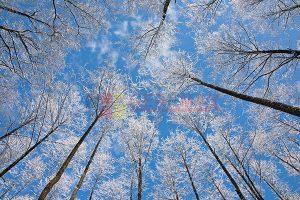 Ağaç - Gökyüzü Gergi Tavan Görselleri 32