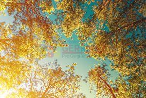 Ağaç - Gökyüzü Gergi Tavan Görselleri 329