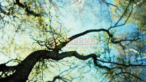 Ağaç - Gökyüzü Gergi Tavan Görselleri 332