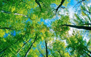 Ağaç - Gökyüzü Gergi Tavan Görselleri 334