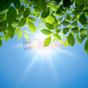 Ağaç - Gökyüzü Gergi Tavan Görselleri 35