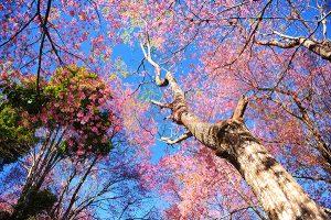 Ağaç - Gökyüzü Gergi Tavan Görselleri 38
