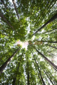 Ağaç - Gökyüzü Gergi Tavan Görselleri 44
