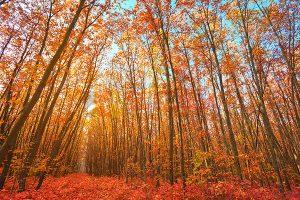 Ağaç - Gökyüzü Gergi Tavan Görselleri 45