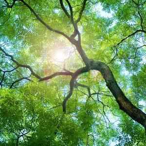 Ağaç - Gökyüzü Gergi Tavan Görselleri 46