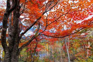 Ağaç - Gökyüzü Gergi Tavan Görselleri 48