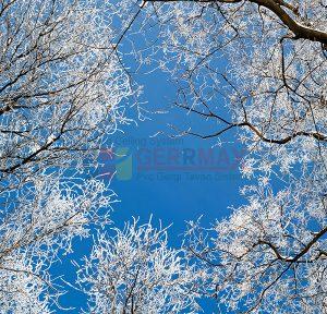 Ağaç - Gökyüzü Gergi Tavan Görselleri 49
