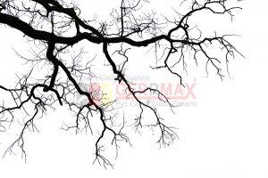Ağaç - Gökyüzü Gergi Tavan Görselleri 50