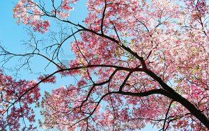 Ağaç - Gökyüzü Gergi Tavan Görselleri 54