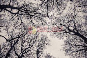 Ağaç - Gökyüzü Gergi Tavan Görselleri 5