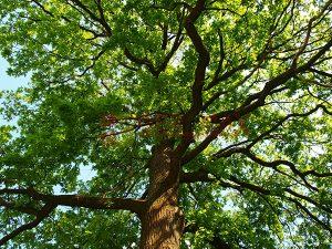 Ağaç - Gökyüzü Gergi Tavan Görselleri 61