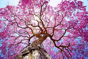 Ağaç - Gökyüzü Gergi Tavan Görselleri 63