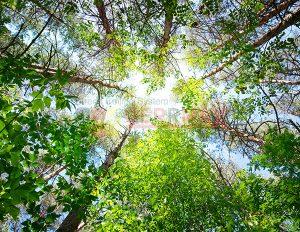 Ağaç - Gökyüzü Gergi Tavan Görselleri 64