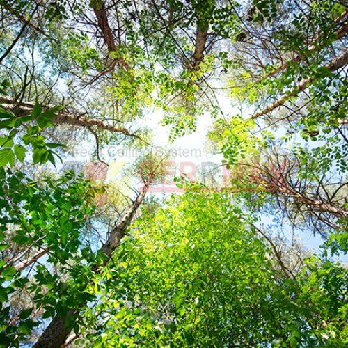 Ağaç – Gökyüzü Gergi Tavan Görselleri