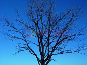 Ağaç - Gökyüzü Gergi Tavan Görselleri 69