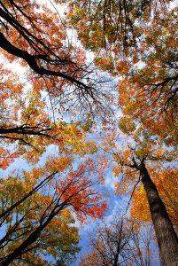 Ağaç - Gökyüzü Gergi Tavan Görselleri 76