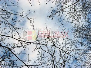 Ağaç - Gökyüzü Gergi Tavan Görselleri 7