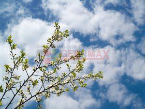 Ağaç - Gökyüzü Gergi Tavan Görselleri 85