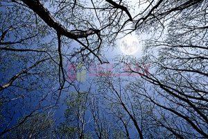 Ağaç - Gökyüzü Gergi Tavan Görselleri 91